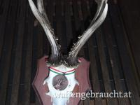 Rehbockjagd in Ungarn im Raum Budapest