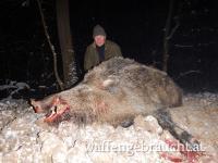 Wildschweinjagd 160€/Nacht pauschal