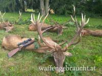 Rot-, Damhirsch, Muffelwidder in Ungarn
